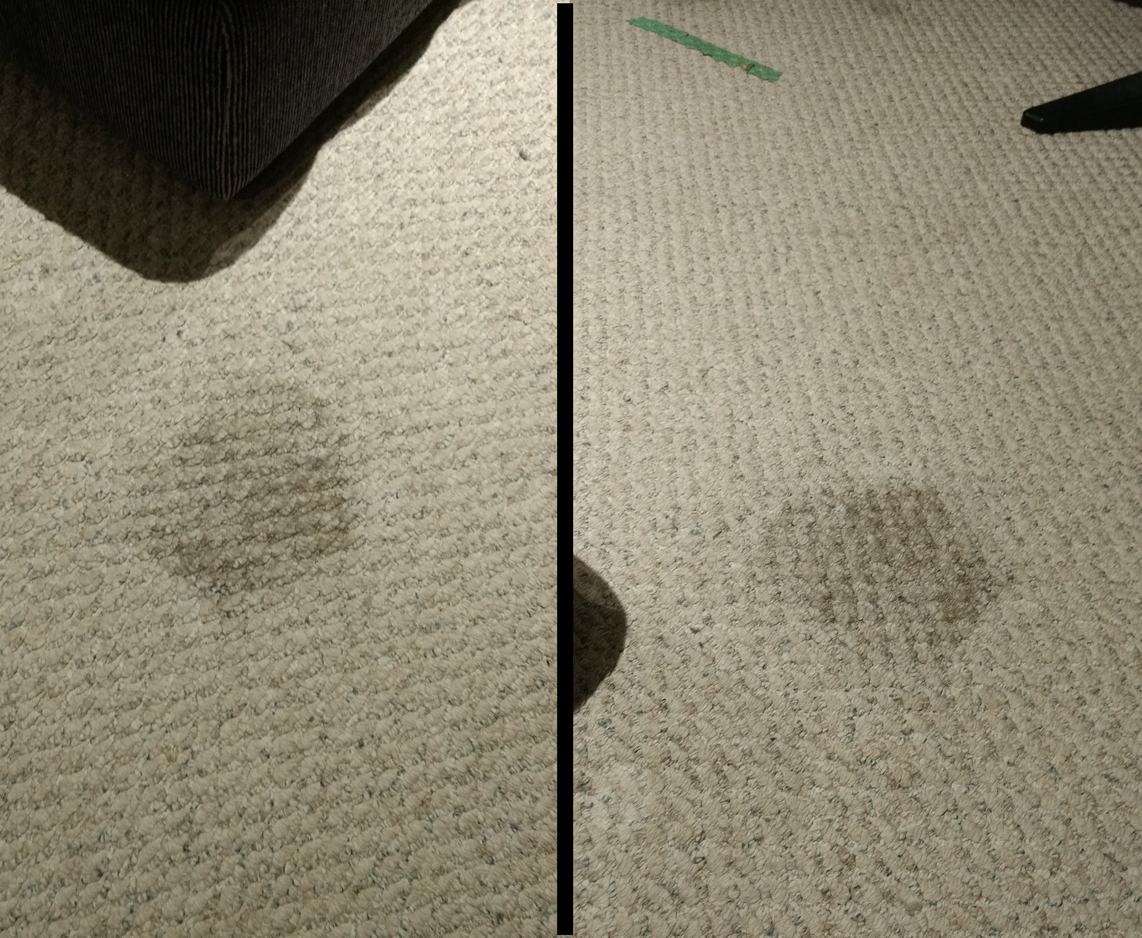 how to remove pet stains from carpet awesome idiots. Black Bedroom Furniture Sets. Home Design Ideas